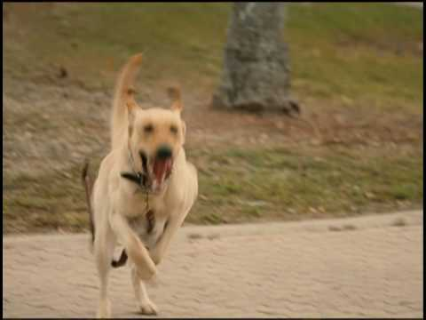Marley & Me Blu-ray & DVD TV spot