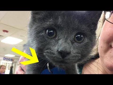 Woman Adopting Kitten Can't Stop Crying After Reading The Words On His Tag