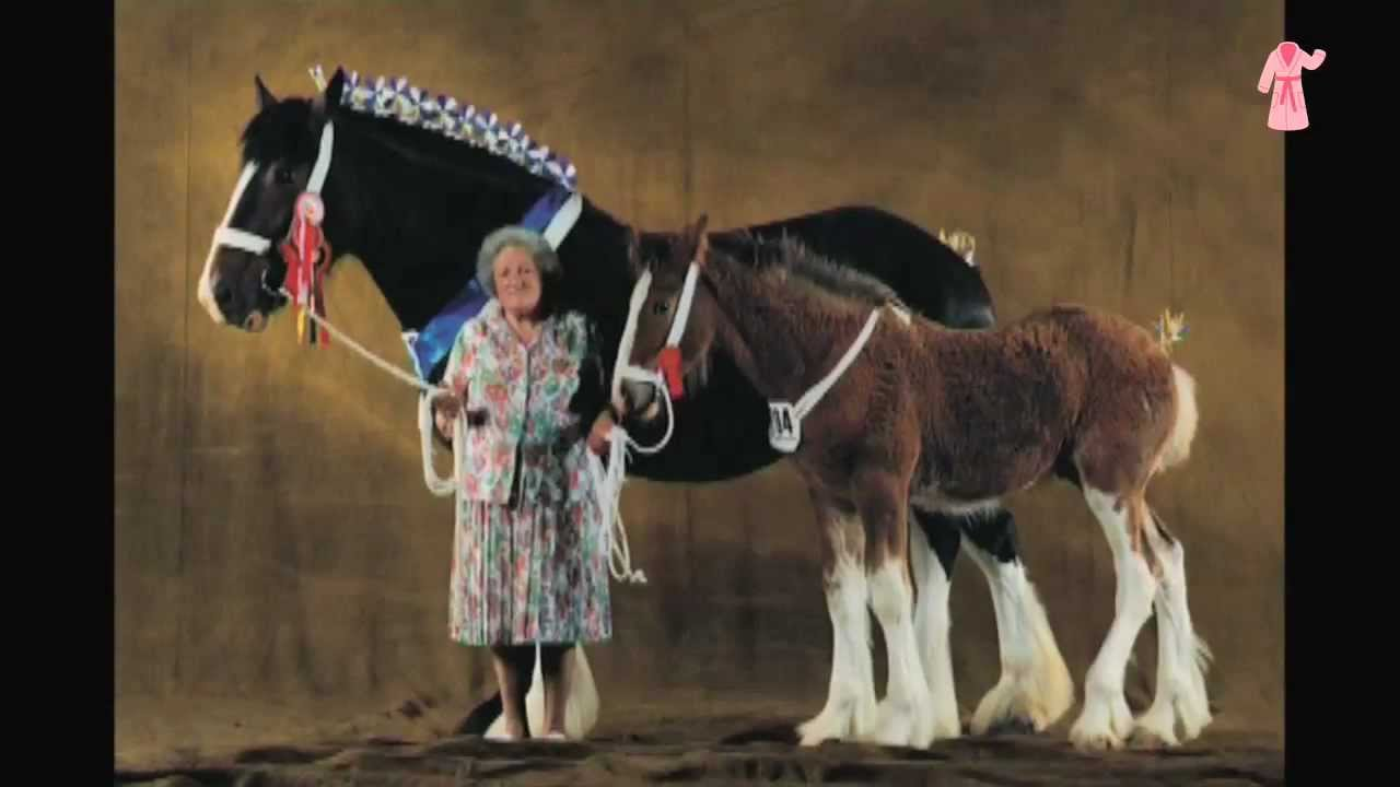 Les plus beaux chevaux du monde vus par yann arthus bertrand yo - Les plus beaux parquets ...