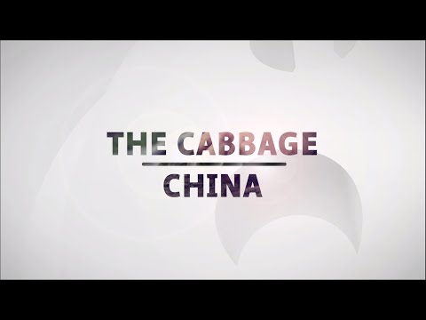 Cabbage production in China – The daily life of local producers – EP06