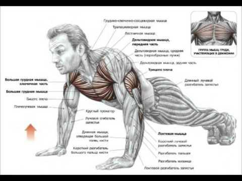 Накачать мышцы тела в домашних условиях