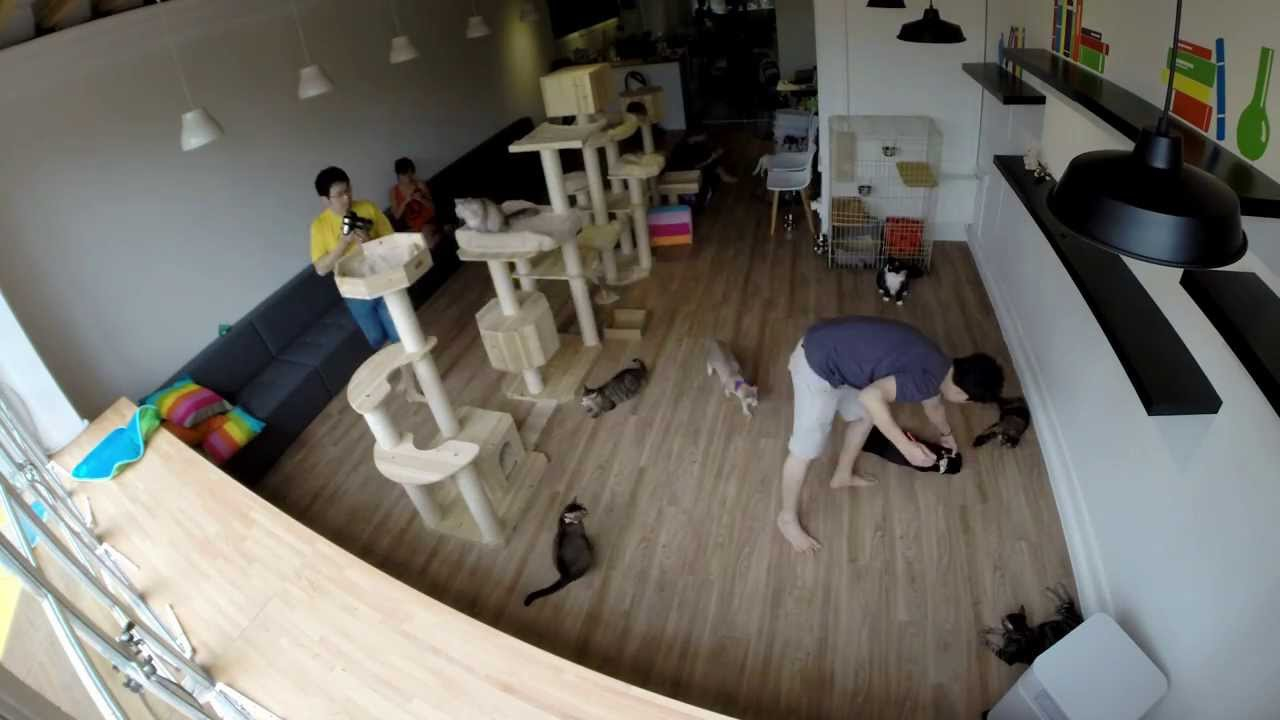 Neko Cat Youtube Photographer
