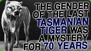 The Gender of the Last Tasmanian Tiger was a Mystery for 70 Years