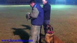 Israeldogs- Club training , Begin phase of KNPV TRAINING