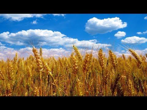 Глобальное потепление делает Россию аграрной супердержавой