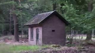 Verlaten huisje in het bos