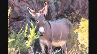 the hee haw song my brown eyed burro, stephen foster