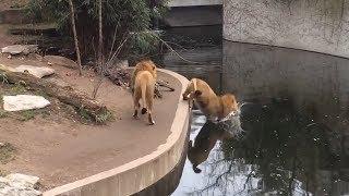Funny Animal Fails Compilation 2019
