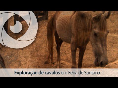 Exploração de cavalos em Feira de Santana