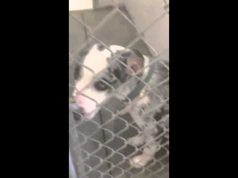 URGENT DOG FOR ADOPTION!- Sumter County Animal Services- Lake Panasoffkee, FL
