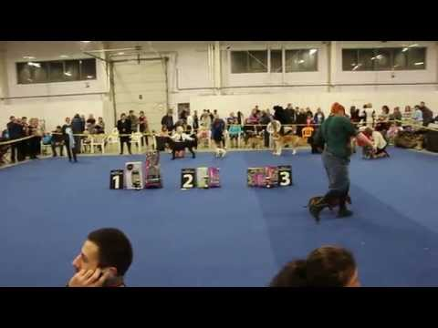 Выставка собак БЕЛЫЙ БАРС-2015 бест щенков казань