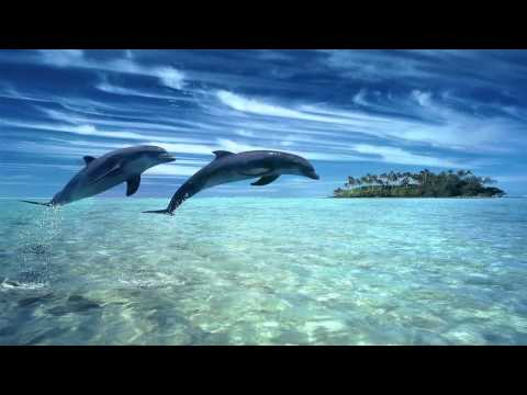 -dolphin-dreams-melody-oceans-zen-and-relaxation-.html