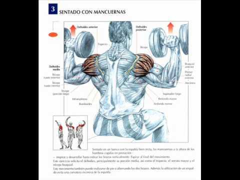 Rutina De Pesas para el GYM de hombro y trapecio (muy