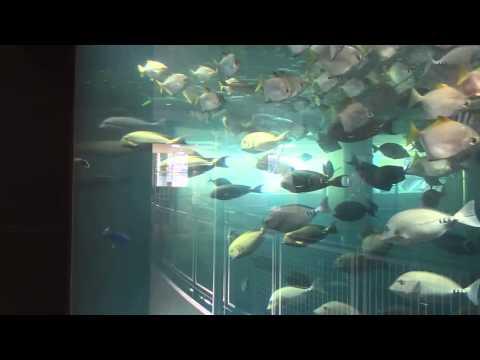 Sea turtles 海亀