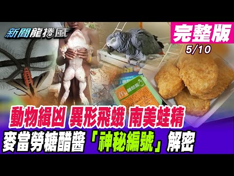台灣-新聞龍捲風-20210510 蒼蠅、鸚鵡、貓狗「動物緝凶」辦案嚮導?異形巨蛾「來自冥界的使者」帶來死亡預兆?