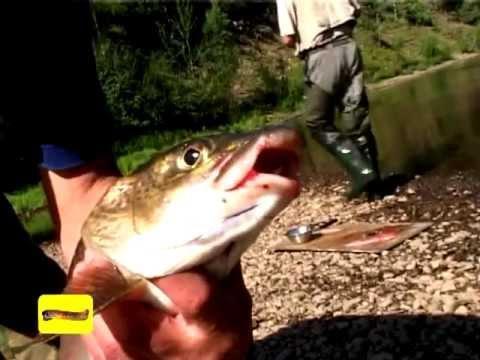 рыбалка канал сериал