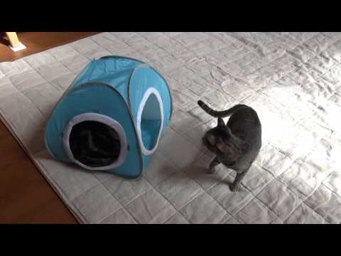 水色テントとねこ2。-Light blue tent and Maru&Hana2.-