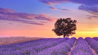 Relaxing Music For Stress Relief Soothing Music For Sleep Meditation Spa