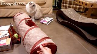 Cat Tunnel: Ragdoll Cats Receive SmartyKat Crackle Chute Cat Tunnel for Review - ねこ - Floppycats