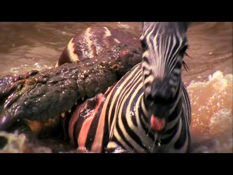 Deadly Instinct: Crocodiles