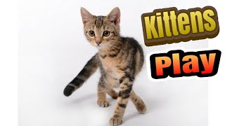 Cute kitten ||Cute baby animals vedios for kids