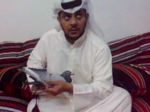 Meshaal Alajabilan kuwait racing pigeon champion 1996-2005