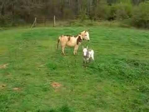 Baby Donkey Brand New! video