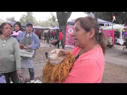 Animalandia albergó a los amantes de las mascotas en el parque San Martín
