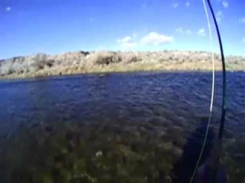 Fly Fishing the San Juan River