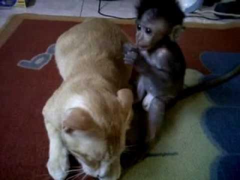 Monyet Lucu Youtube