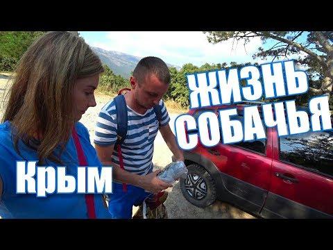 Крым. КОВЧЕГ. Приют для собак. Ялта 2018
