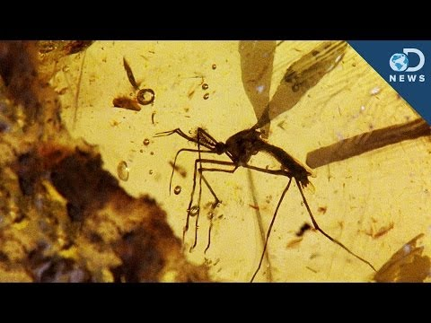Could a Fossilized Mosquito Resurrect Dinosaurs?