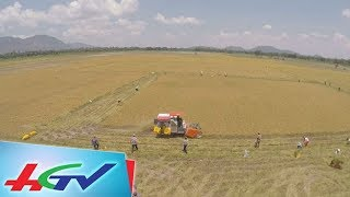 Việt Nam trúng thầu xuất khẩu gạo Japonica sang Hàn Quốc   BẢN TIN KINH TẾ NÔNG NGHIỆP - 30/5/2018