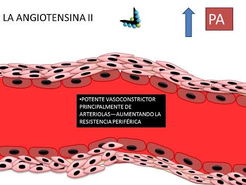 filtracion y reabsorcion renal