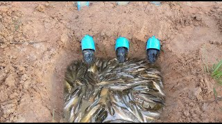 Water Pipe Deep Hole Fish Trap To Catch A Lot Of Fish By A Smart Girl