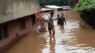Yogesh kabade sangli महापुर rescue team
