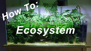 How To: Ecosystem - Episode 7 || No filter No heater No Ferts No co2