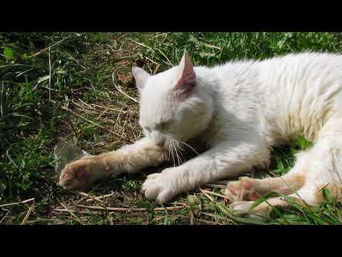 Кот из приюта обживается