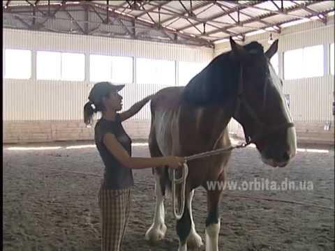 Конь-великан в Донецке
