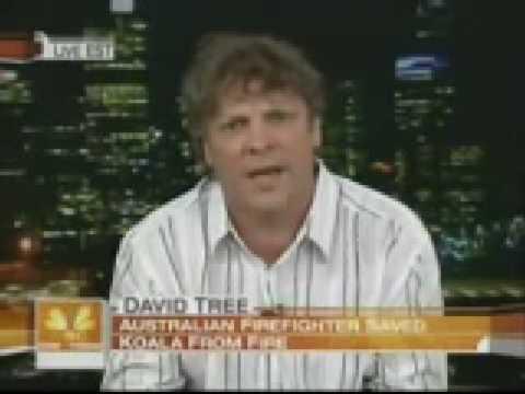 Sam the Koala - David Tree on US TV (Today Show) 12 Feb 2009