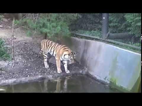 Tierpark Hagenbeck - Tiger, Elefant & Bär (2019)
