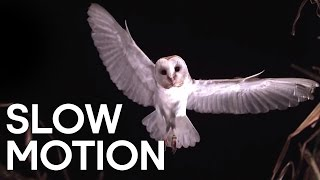 Birds in Slow Motion - Earth Unplugged