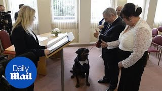 Rescue Rottweiler was the best man for his owner's wedding