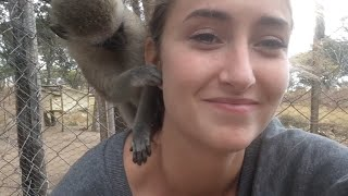 Monkey Business at Twala Trust Animal Sanctuary - part 1