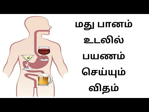 How Alcohol Is Digested By Our Body ? | Tamil