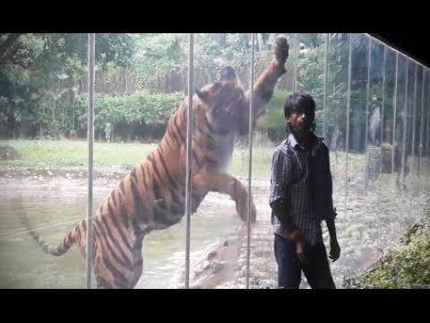 НАПАДЕНИЯ ЖИВОТНЫХ Звери нападают на людей в зоопарке ТОП 10