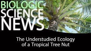 Science News - The Understudied Ecology of a Tropical Tree Nut