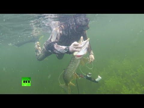 рыбалка на щуку на реке в томской области