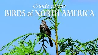 Naturescapes 4k Guide To The Birds Of North America John Grout