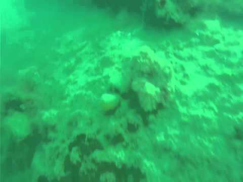Relitto del Molch (bassa visibilità) - Sistiana (TS)